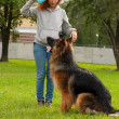 German shepherd with girl — Stockfoto