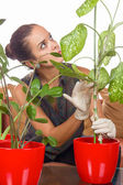 Growing plants — Stock Photo