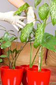 Hands with gloves nurture plants — Stock Photo