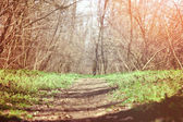 Forest path — Zdjęcie stockowe