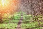 Caminho de floresta vintage — Foto Stock