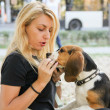 Beautiful woman holding and feeding beagle puppy dog — Stock Photo #41896619