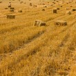 Field of hay bales — Stock Photo