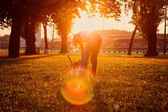 Woman playing with her dog in the park at sunset — Stock Photo