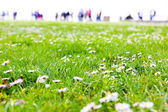 Field of spring flowers — Stockfoto