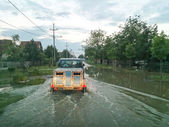 Transport animals to safety through a flooded road with car, eva — Stock Photo