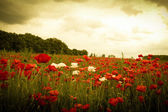 Sunset in horizon covering field of wild flowers — Stock Photo