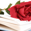 Open book and red rose on pages of book on white background — Stock Photo