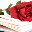 Open book and red rose on pages of book on white background — Stock Photo #49665575