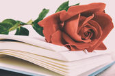 Book and red rose on pages of book on white background — Stock Photo