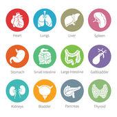 Vector icon set lidských vnitřních orgánů v plochém stylu — Stock vektor
