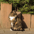 Cat in the sun looking away — Stock Photo