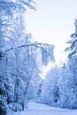 Winter scene. road through the winter woods — Stock Photo