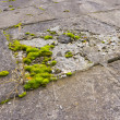 Stock Photo: Green moss on concrete slabs