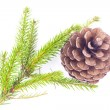 Fir cone and spruce branch — Stock Photo #39234005