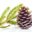 Stock Photo: Fir cone and spruce branch