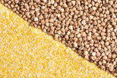 Corn grits and buckwheat background — Stockfoto