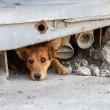 Unhappy homeless dog that lives underground — Stock Photo