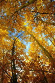 Golden Canopy — Stock Photo