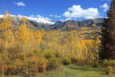 Elk Mountains and Golden Aspens — Stock Photo