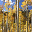 Colorado Fall Foliage — Stock Photo