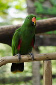 Beautiful parrot sitting on the perch — Stock fotografie