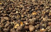 Chinese mushroom — Stock Photo