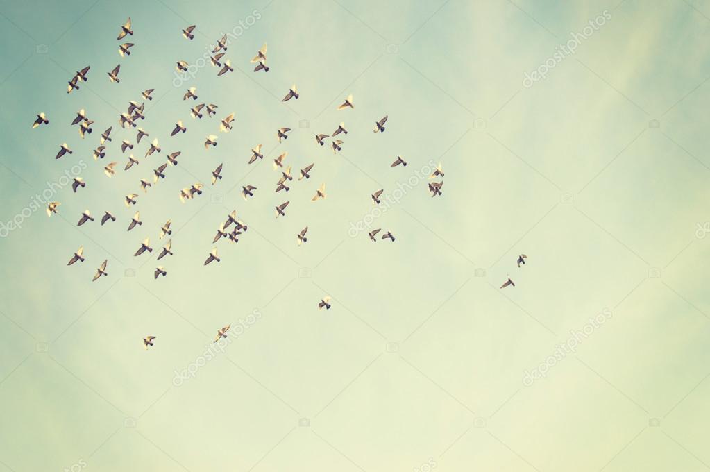 蓝蓝的天空中飞翔的鸟儿