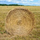 収穫. — ストック写真