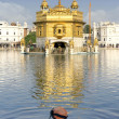 Sikh prayer in pond of Golden Temple in Amritsar, Punjab, India. — Stock Photo #33553463