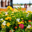 Lantana Flower. — Stock Photo