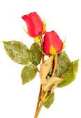 Rose on white background — Stock Photo