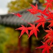 Branch with red autumn leaves on the background of the Korean royal pagoda. — Stock Photo
