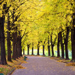 Parkway in autumn park — Stock Photo #33305245