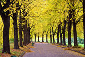 Parkway in the autumn park — Stock Photo