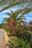 Flowers and palm trees along a road — Stock Photo