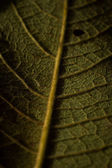 Back side of a leaf — Stock Photo