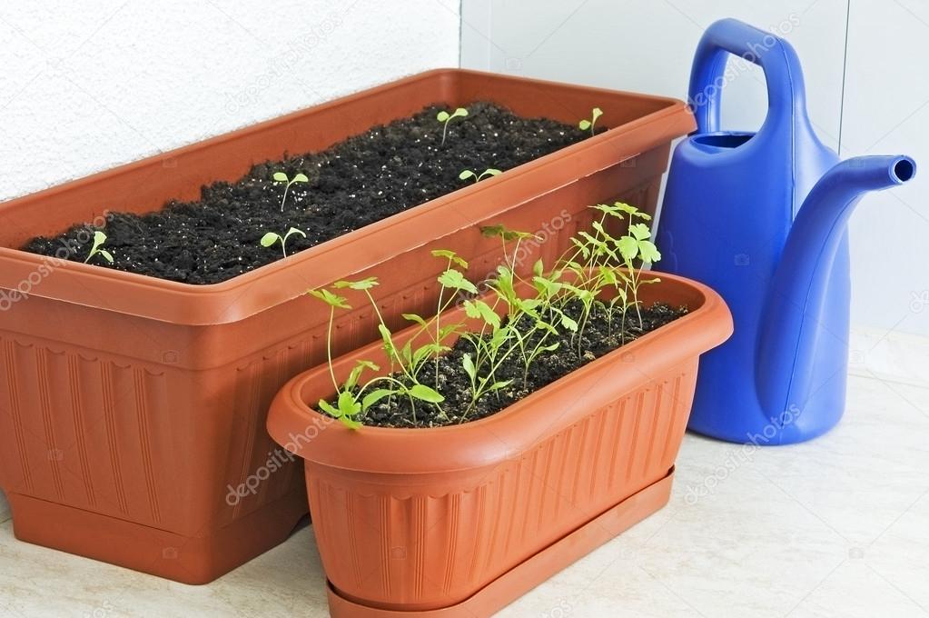 5 видов зелени, которые без проблем вырастить в квартире зап.