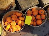 Yellow pumpkins, cucurbita pepo at the green market — Stock Photo