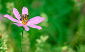 Summer wildflower with bee — Stock Photo