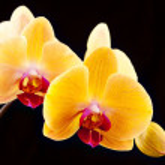 Beautiful yellow flowers — Stock Photo #32317019