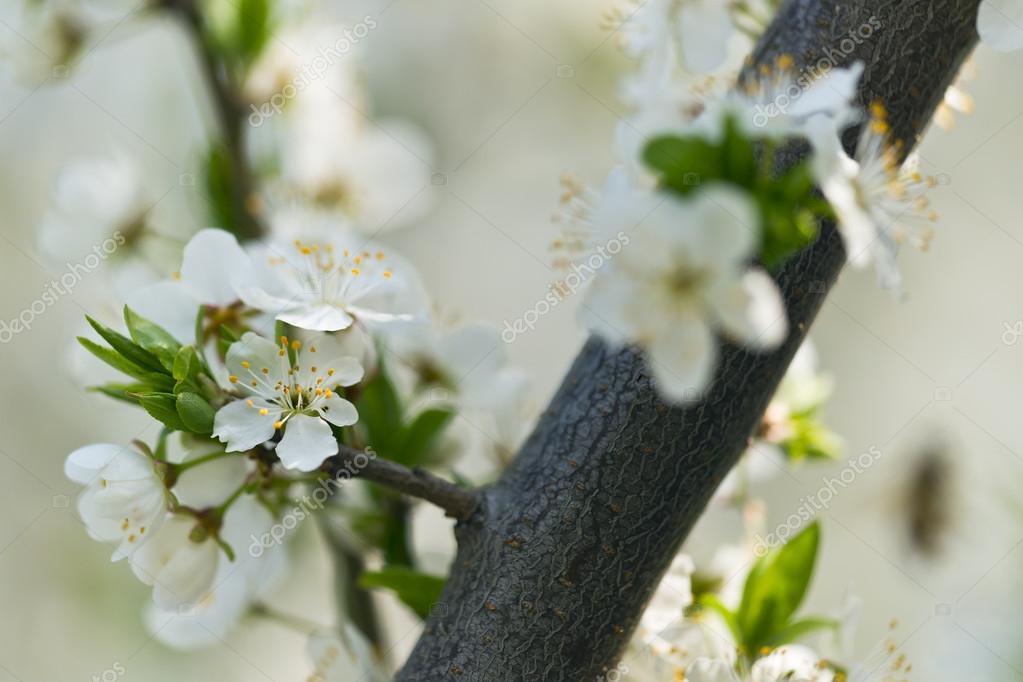 古风手绘梅花树展示