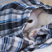 Cat hiding in clothes — Stock Photo