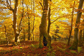 árvores de outono — Fotografia Stock