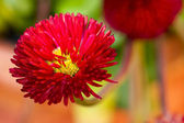 Red flower — Stockfoto