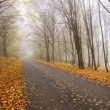 Stock Photo: Hazy forest road