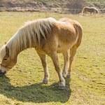 Horse — Stock Photo #42657195