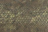 Snake skin texture background — Stock Photo
