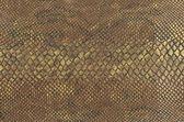 Colour snake skin texture background — Stock Photo