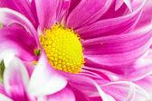 Flower Isolation — Стоковое фото